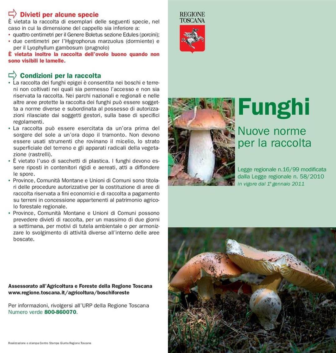 Norma; Raccolta; Funghi; Toscana;